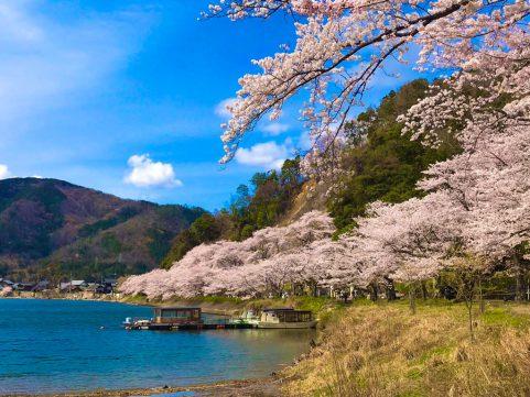 ビワ1/5の旅 海津大崎の桜